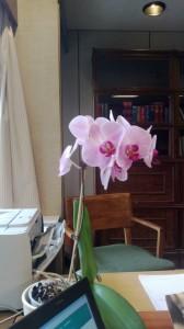 Någon kanske undrar hur den blomma jag fick av personalen när jag sparkades från min post som kanslichef har klarat sommaren med bristande tillsyn. Här är beviset.